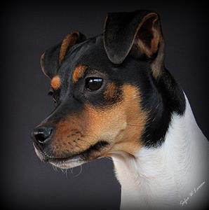 1 DOGS, QIRA, da Silva posters 19 april -12 133